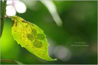 '17 紫陽花*Ⅰ - It's only photo