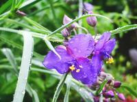 雨らしい雨・・・ - 【出逢いの花々】
