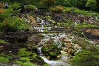 天然記念物:チャツボミゴケ - 武蔵野の野鳥