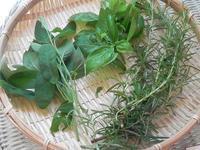 「3種類のハーブソルト」&エキナセアを植える - 心とカラダが元気になるアロマ&ハーブガーデン教室chant rose