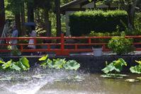 長弓寺の紫陽花 - 花・tuzuri