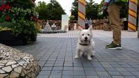 横浜ぶら~り散歩♪ - はなちゃんと一緒♪