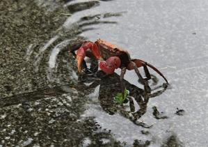 梅雨 - 老いの小文