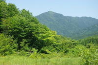 No  97  一人ぼっちの毛無山(2017.6.19) - カメラをもってぶらぶら散歩中