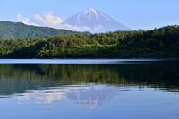 西湖 - 富士山に夢中