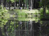 円山公園の池(その1) - 小さなお庭のある家