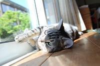【本日のどらねこハリー】 昼寝はいいけど、熱中症に気を付けてほしいと思う毛皮。 - ツルカメ DAYS