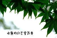 水無月の三室戸寺 -1- - Photo Break