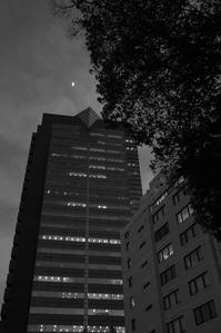 月光浴を嗜む巨木の下の洋館 - Film&Gasoline