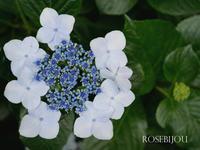 撮影会♪ - RoseBijou-parler*blog