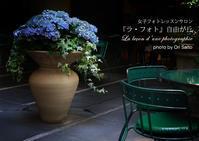 ZEISS Loxia 2/50で撮影する、ドゥ マゴ パリ 本店 (LES DEUX MAGOTS PARIS)の紫陽花 - 東京女子フォトレッスンサロン『ラ・フォト自由が丘』とさいとうおり