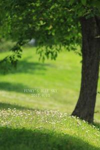 散歩の後のお楽しみ♪ - FUNKY'S BLUE SKY
