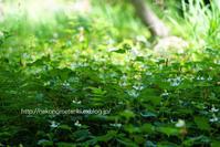 初夏の森 - ねこの目天気。