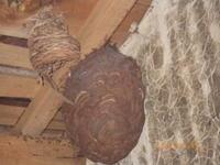 げげへえ~:スズメバチの巣が・・・・ - 名古屋市の不動産情報をお届けします。大丸屋不動産