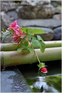手水舎の季節花 - muku3のフォトスケッチ