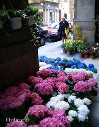 A Firenze - フィレンツェにて - - Ordinario な日々