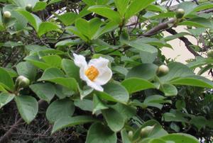 庭の様子 - 私の見た自然
