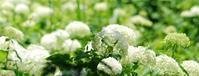 バードウオツチング - いぐさん流 山と花の写真(富士山)