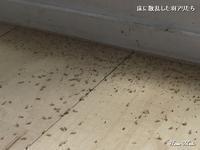 羽アリは、これくらい大量に出てきます - 只今建築中