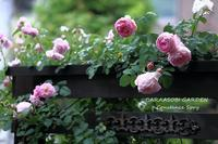 雨 - バラと遊ぶ庭