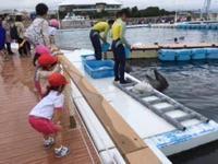 幼稚園の遠足 八景島シーパラダイスへ - 今日は昨日より少し遠くへ行ってみよう