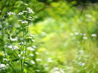 遊歩ー森林植物園 - ギャルリー ヒロ