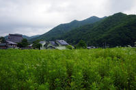 Cultivation - 良え畝のブログ