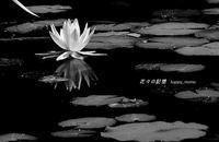 泥沼の中から - 花々の記憶