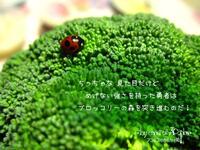 てんとう虫珍事 - アコネスのおもちゃ箱 ぽつぽつ更新ブログ
