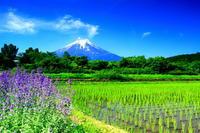 29年6月の富士(18)富士北麓の富士 - 富士への散歩道 ~撮影記~