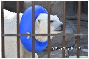 ほっきょくぐまのいちにち 2017/06/18② - メタのマクロ視点な奇跡なんて白熊の為