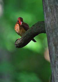 遠征 7 - 今日も鳥撮り