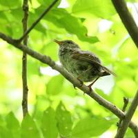 奥は高湿度の里山 - TACOSの野鳥日記