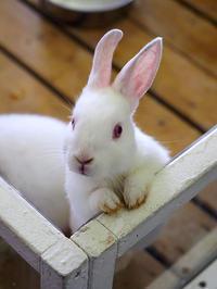 6月22日(木) 聞き耳 - ほのぼの動物写真日記