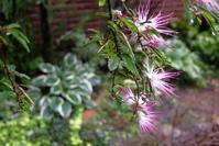 梅雨庭と・・ - お庭のおと