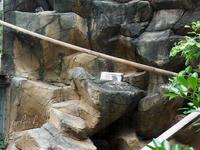 王子動物園 6月18日 その2 - お散歩ふぉと