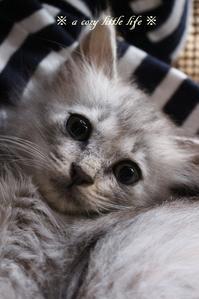 子猫のグレーちゃん - a cozy little life