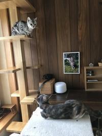 猫同士 - 土筆の庭