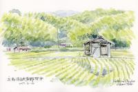 水田と農具小屋 - 風と雲