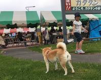 《地元訪問レポート》5月のドライブ、芦別→滝川→浦臼編(1) - 柴犬さくら、北国に生きる