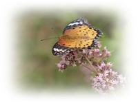 花と蝶 - ひとりあそび