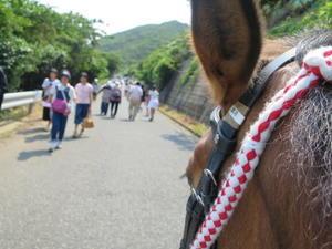 あじさい祭り、対州馬と一緒にウォーキング - 対州馬に魅せられて~星になった愛犬りんご達と新パートナー犬ラファール&ルアナと共に~