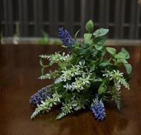 アナベルが咲き始める - ヒバリのつぶやき