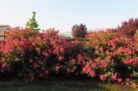 ホテル予約サイトか宿への電話予約か、イタリアの場合とアブルッツォ薔薇の宿 - ペルージャ発 なおこの絵日記 - Fotoblog da Perugia
