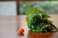 青紫蘇ジュースとミニトマトの「純あま」初採り - refresh-3