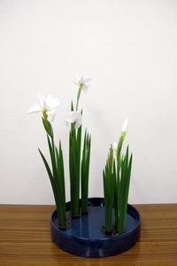 6月のイケバナ 花菖蒲 - リリ子の一坪ガーデン