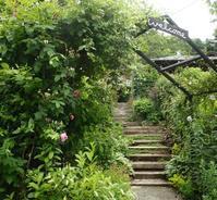 山端の庭1141m - 冬青窯八ヶ岳便り