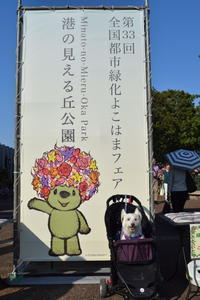 ♪ ダニエル  ローズガーデンのはしごしちゃったよ~(#^.^#) ♪ - happy west DANIEL story