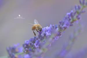 ぶんぶん の 季節 - お花びより