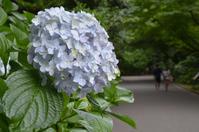 新宿御苑で花の観賞 - kenのデジカメライフ